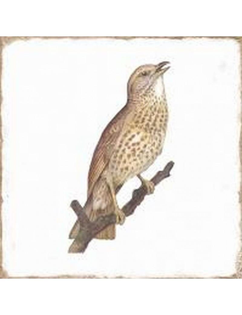 Płytka Fabresa Forli Birds Brillo 20x20